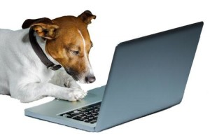Dog Training Planner System