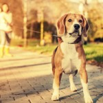 Dog Lead Training Tips: To Lead Or Not To Lead