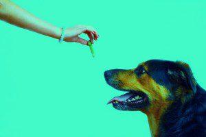 dog reward training system