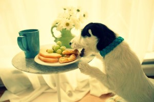 how to stop dog stealing food